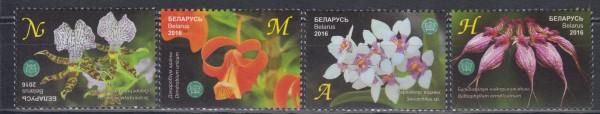 Bot. Garten NAS, Orchideen (16P02)