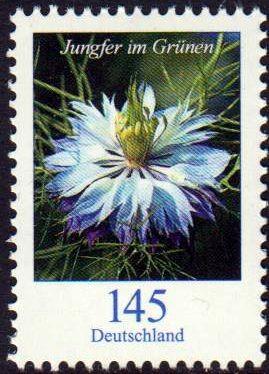 Dauer: Blume, Jungfer im Grünen, 145er mit rückseitige Nummer