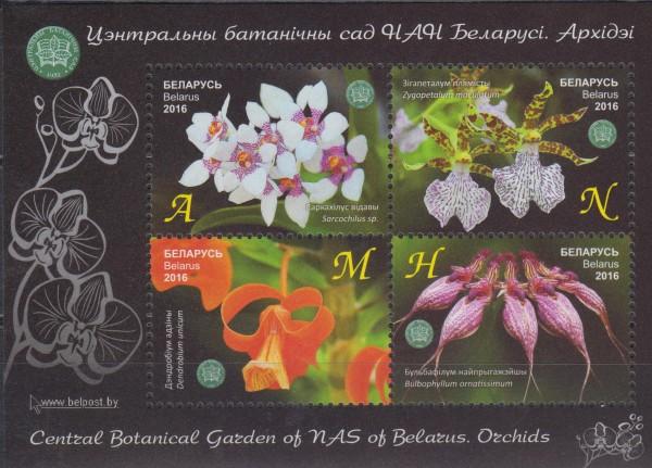 Block: Bot. Garten NAS, Orchideen (16P02)