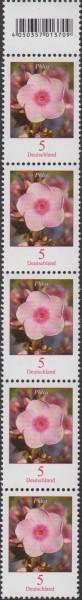 Dauer Blumen, Phlox, Cent, 5er-Strei- fen mit anhängender Codemarke