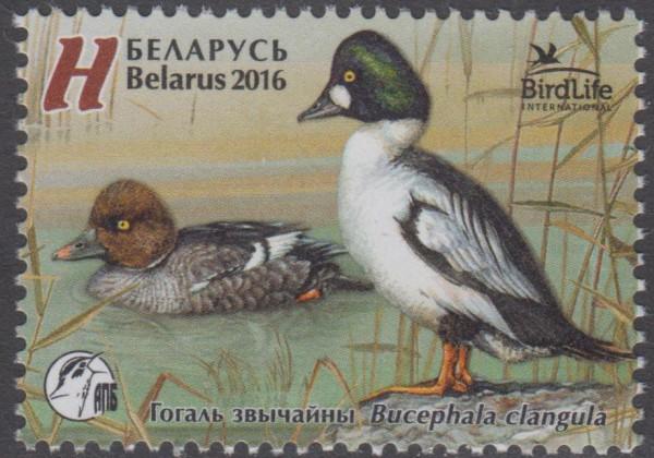 Vogel des Jahres, Schellente (16P05)