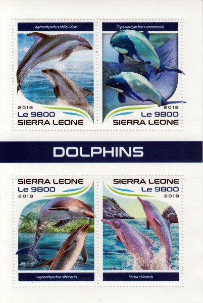Delfine 2018, Weißstreifendelphin